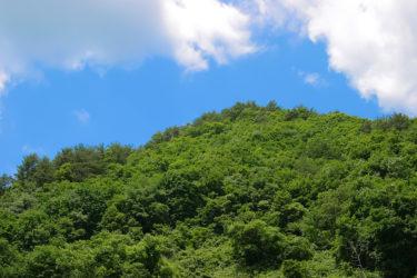 小山(栃木)で当たると有名な占い3選!口コミやオススメの占い師も紹介!