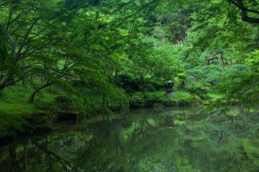 成田山で当たると有名な占い4選!口コミやオススメの占い師も紹介!