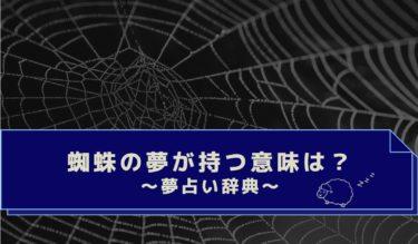 色・大きさ・蜘蛛の種類は?蜘蛛の巣・蜘蛛の夢の意味まとめ