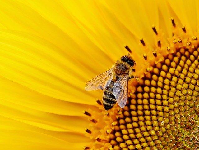 刺され 蜂 た 占い に 夢